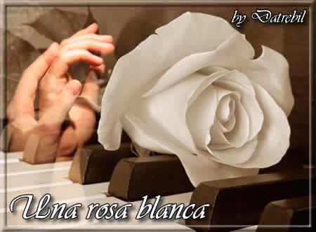 unarosablancalr3