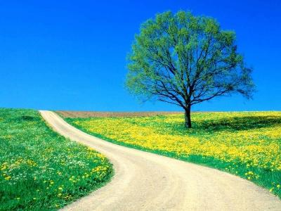 400_1176066317_flowers-springroad
