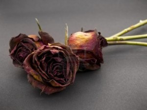4432130-antiguo-rosas-rojas-secos-contra-un-fondo-oscuro